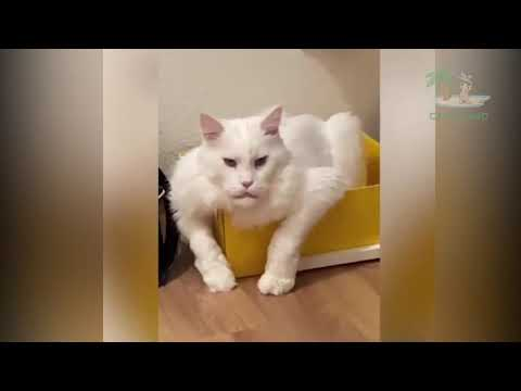 TOP Funny Animals Make You Laugh ? Cute and Funny Animal Videos Compilation ?Cafa Land 2020 Vines#32