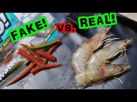 Which Will Catch More Fish?? Ep. 2 Berkley Gulp! Sandworm VS. Frozen Shrimp!