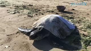 추석 날 제주바다서 멸종위기종 바다거북 구한 사연