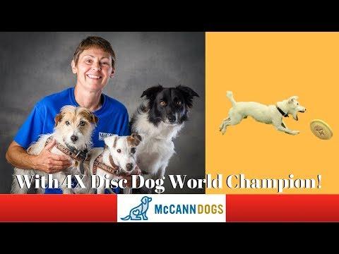 Disc Dog Tricks- The Roller - Professional Dog Training Tips