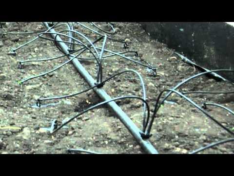 видео: Теплица - система капельного полива