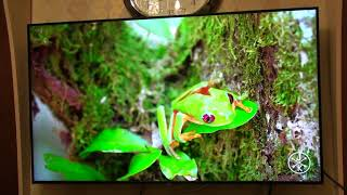 Обзор Телевизора Samsung QE50Q67TAU 2020 (QE50Q60TAU)