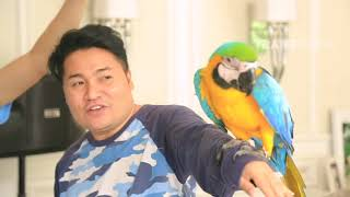 Video JANJI SUCI - Weekend Bersama Banana, Peliharaannya Raffatar (26/11/17) Part 1 download MP3, 3GP, MP4, WEBM, AVI, FLV Desember 2017