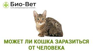 Может ли Кошка Заразиться От Человека & Чем Можно Заразить Кошку.  Ветклиника Био-Вет