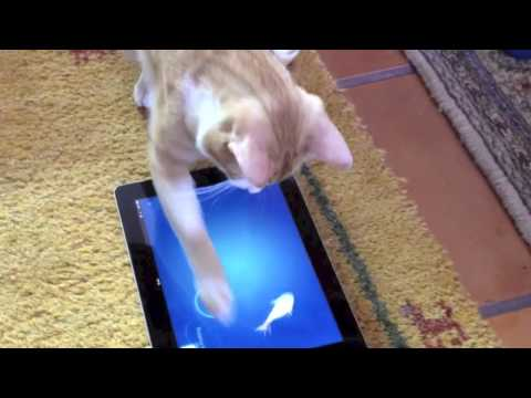 The Smart Cat