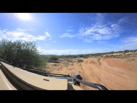 360 degree - Samburu herders with camels