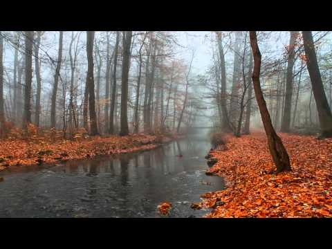 Leonid Kogan plays Bach - Violin Sonata No 1 in B minor, BWV 1014