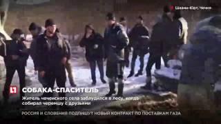В Чечне собака спасла местного жителя, который заблудился в лесу