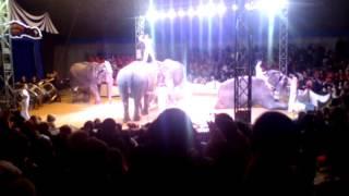 Шоу слонов в Дагестане