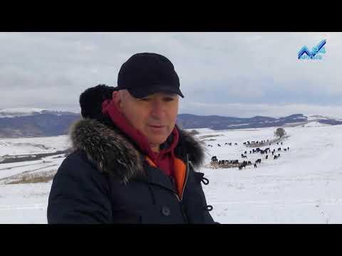 Сельский кластер   Конный завод Хасана Салпагарова 29.11.2017