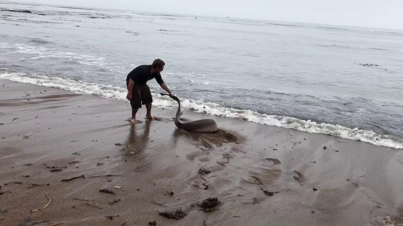 man-releases-shark-at-shell-beach