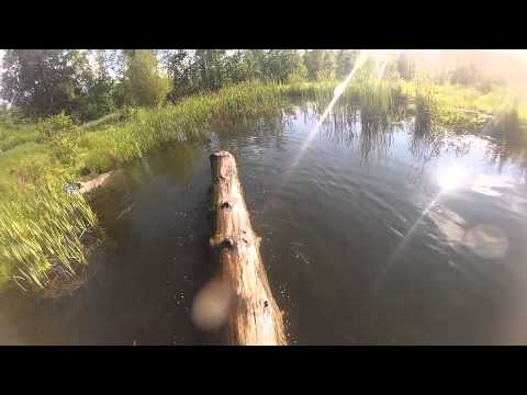 Log rolling at the Farm
