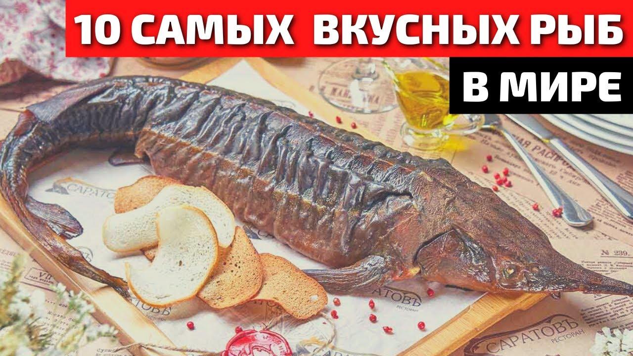 Топ 10 cамой вкусной и полезной рыбы в мире