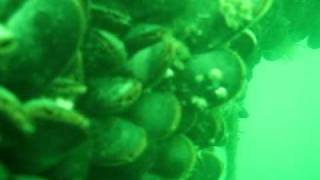 Salt Water Farms mussel farming underwater video