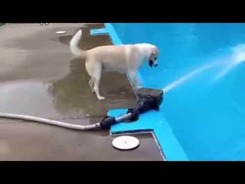 Пёс доигрался