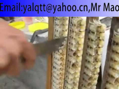 The extraction process of royal jelly, honey.sell