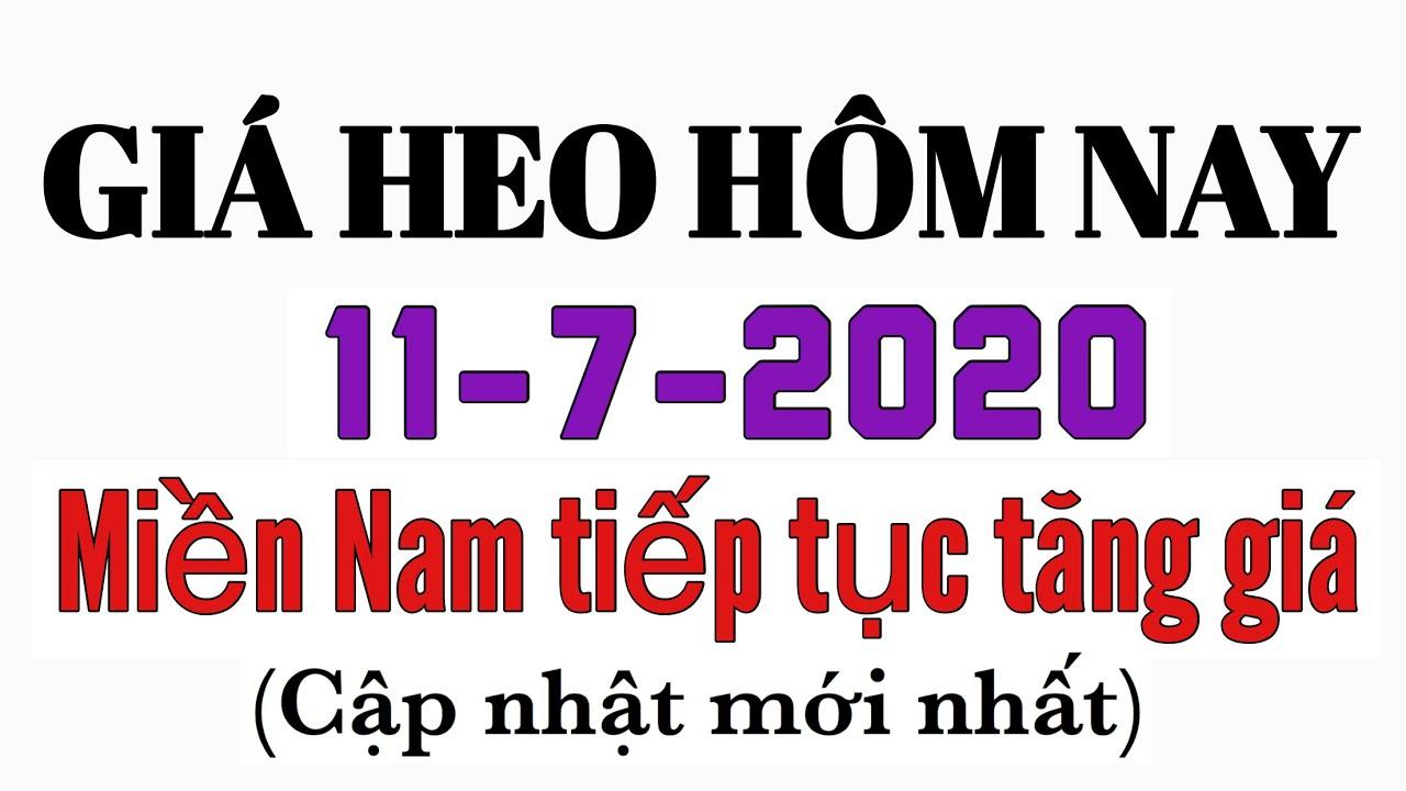 Giá heo hơi hôm nay 11/7/2020 - Miền Nam tiếp tục tăng giá
