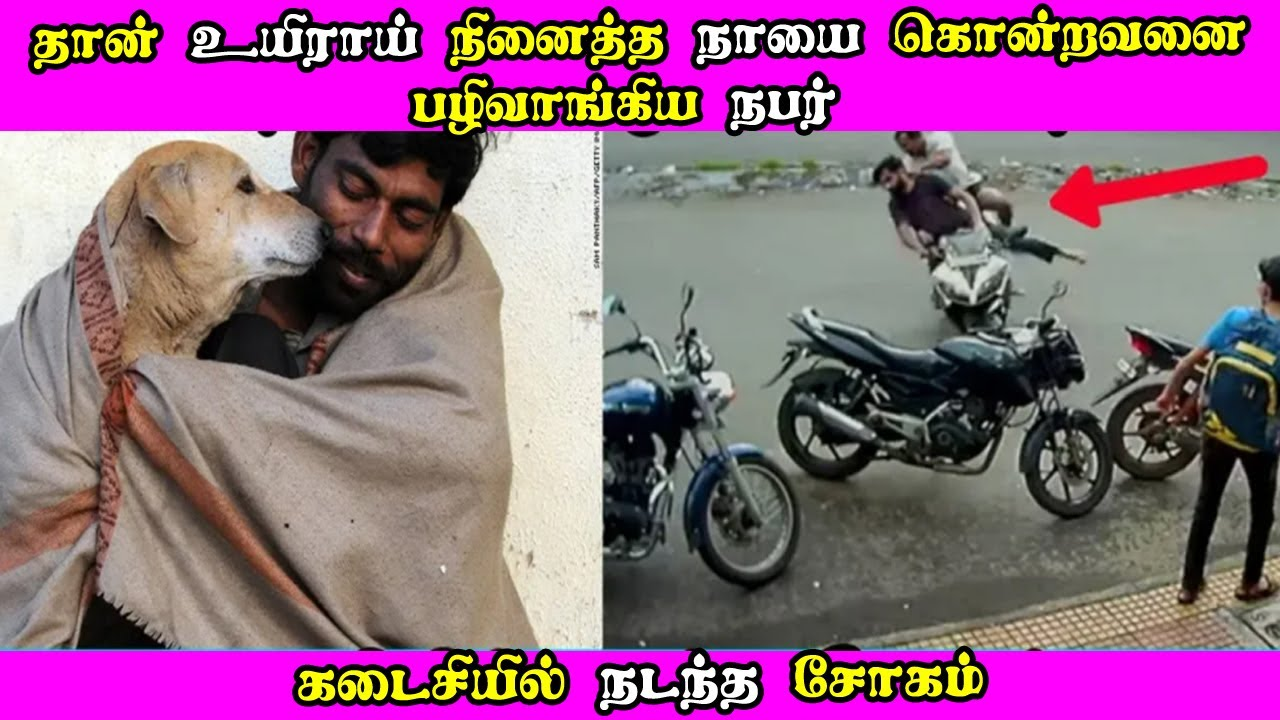 தான் உயிராய் நினைத்த நாயை கொன்றவனை பழிவாங்கிய நபர் கடைசியில் நடந்த சோகம்! Tamil News