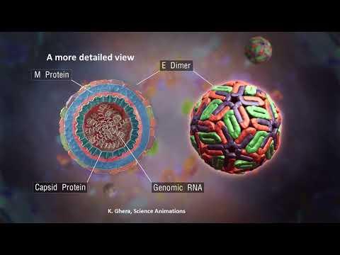 Emerging viral diseases: international research