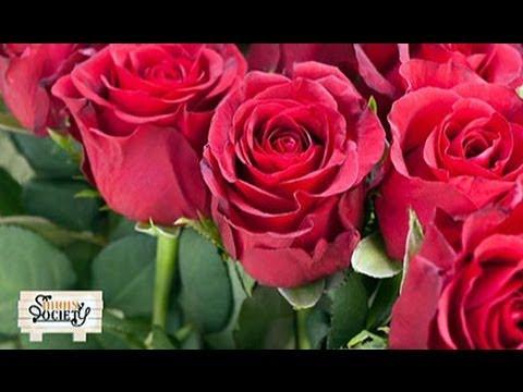 เกษตร Society 2/5/57 : ประเภทของดอกกุหลาบ