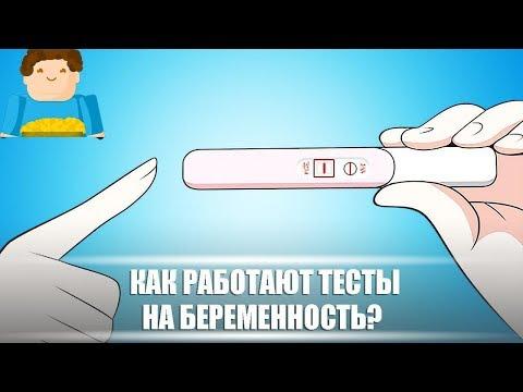 Как работают тесты на беременность? [Plushkin]