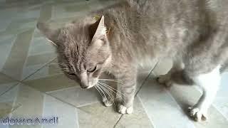 Kucing 3 hari minggat pulang marah marah
