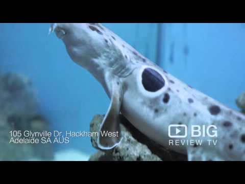 Something Fishy Aquariums Store In Hackham SA Selling Pet Fish And Aquarium