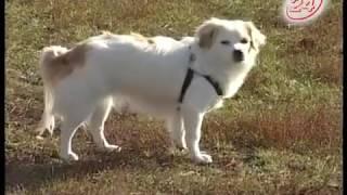 В Челнах может появиться новая площадка для выгула собак