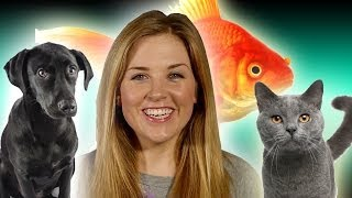 Animal Myths Busted! Top 10 | Earth Unplugged