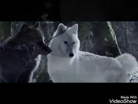 картинки черного волка