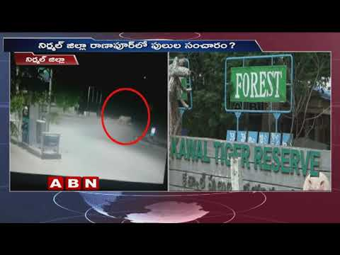 నిర్మల్ జిల్లా రాణాపూర్ లో పులుల సంచారం? | Telangana Latest News | ABN Telugu