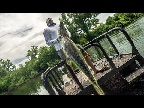 The REAL River Monsters!!! *Life Goal*