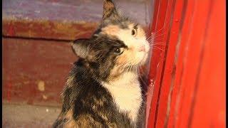 Трехцветная кошка ждет своих счастливых хозяев