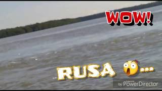 Berburu Rusa di Sungai Merauke 2018