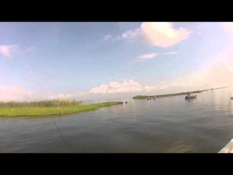 Barataria Bay Fishing