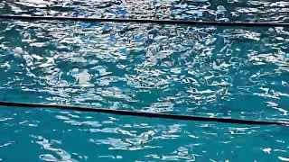 Бассейн Дельфин Киев.MOV(http://dolphinpool.com.ua/ Оздоровительное плавание в Бассейне Дельфин, по доступным ценам для взрослых и детей с 7..., 2012-03-21T09:04:38.000Z)