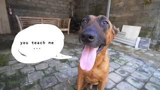 Amazing Dog Journey with Gonggong Barkery