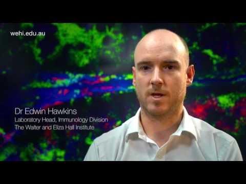 Dr Edwin Hawkins: 'Cellular CCTV' solves leukaemia mystery