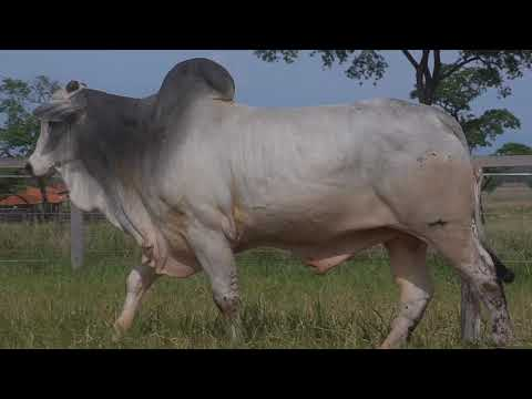 LOTE 170   GPO A 3247