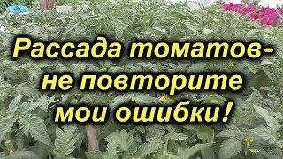 Рассада томатов-наши главные ошибки при выращивании-не повторите их!