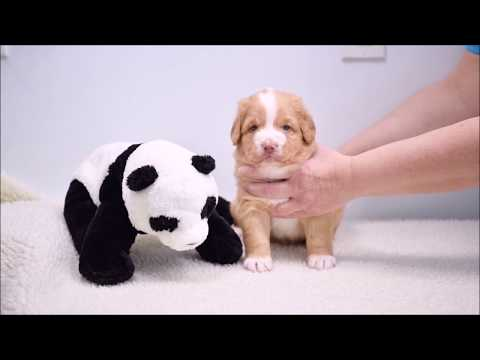 Patty's Puppies Present: Introduction Week 5