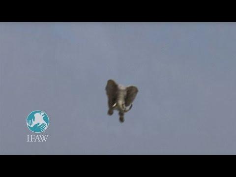elefante-che-vola