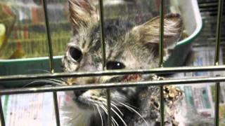 Бездомные животные: Котик Счастливчик - выжил (история спасения кошек)