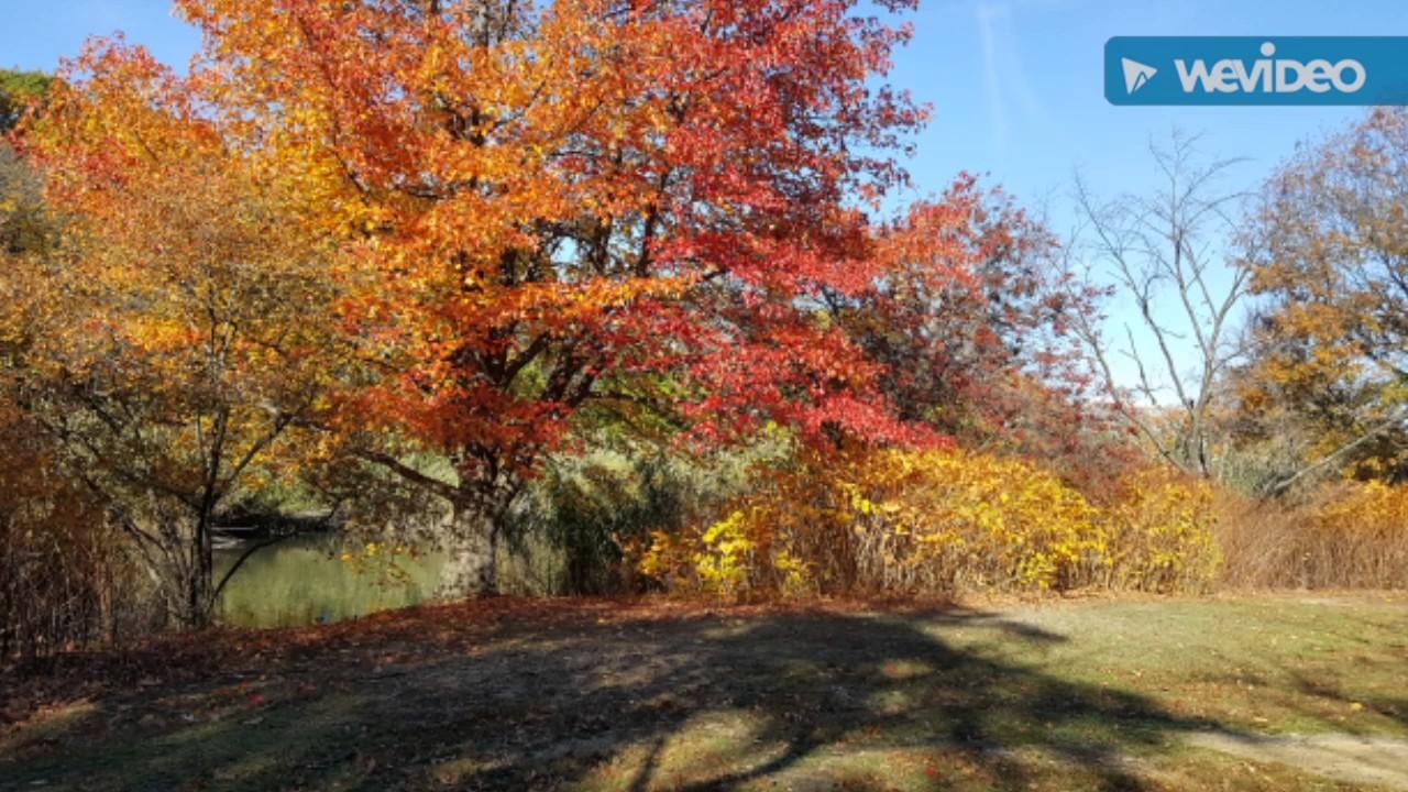 Exceptional Secret Garden Meditation