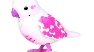 Учим животных. Почему птицы летают? Киндер Зу