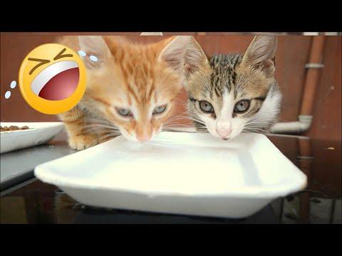 Five Baby Kittens Playing Game |Kitten Videos -Cute Kittens