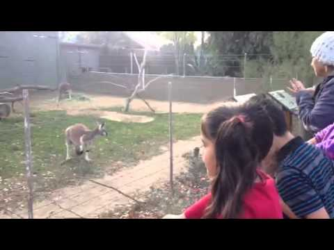 Trip to Fresno Chaffee Zoo