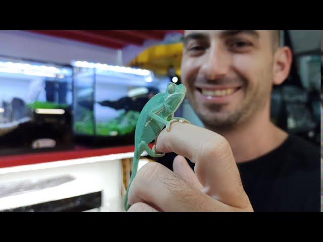 Παραλαβές & More  Reptiles, amphibians, insect   Fdrs Strs 60