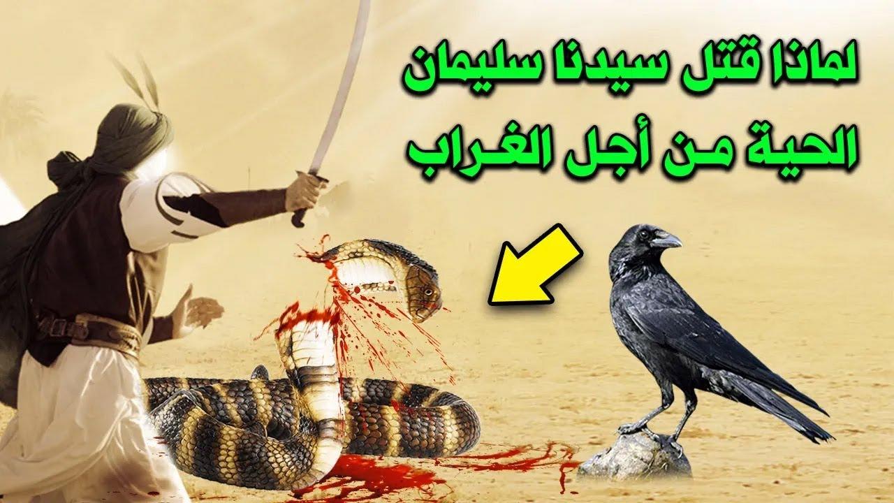 لماذا قتل النبي سليمان الحية من أجل الغراب ؟!