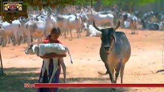 ऐसा भजन जिसे देखकर हर हिन्दू का खून खौल जायेगा / Gou Mata Bhajan 2018 / Latest Rajasthani Song HD